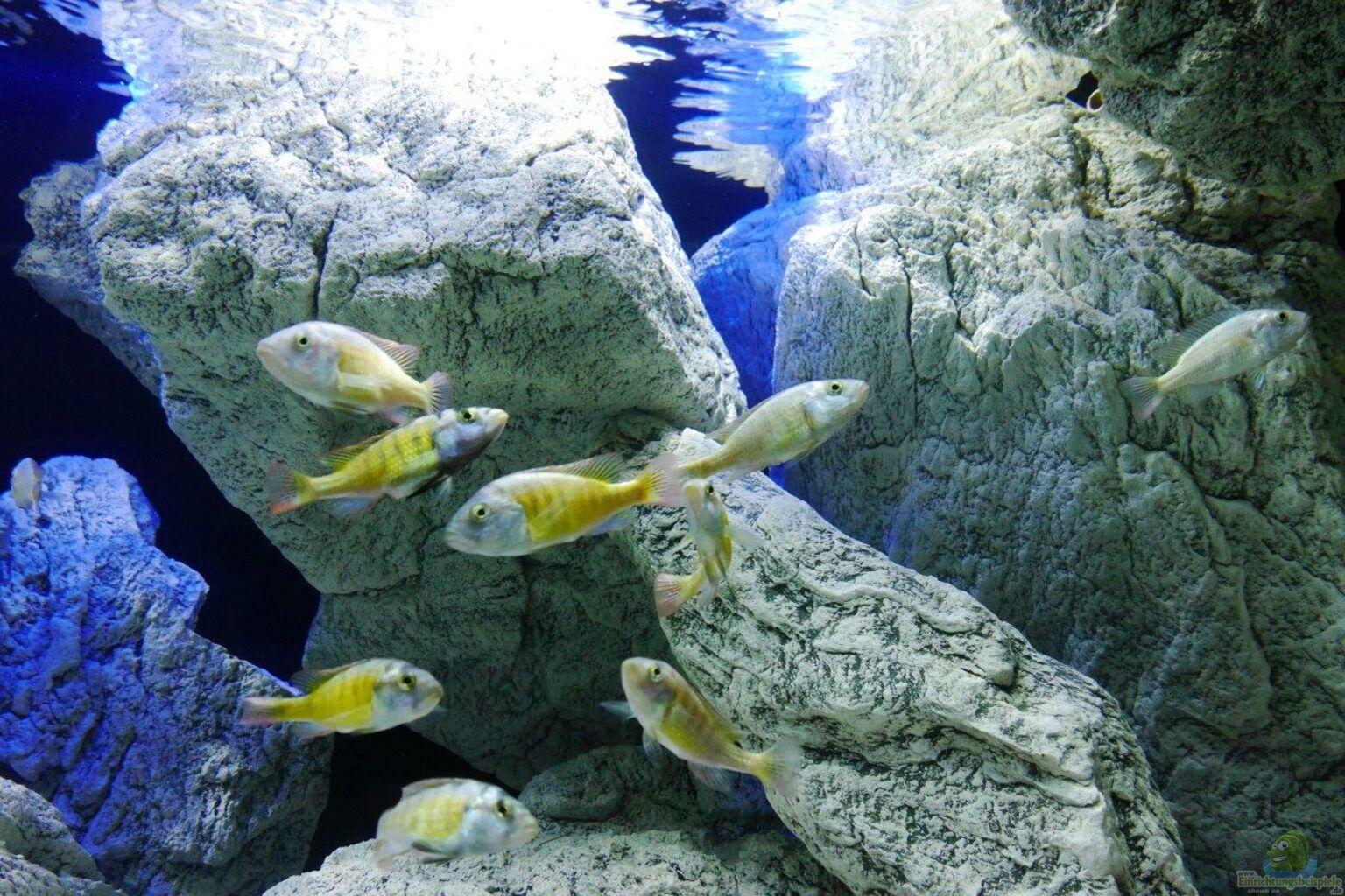 aquarium von petr novak unterwasser h hle. Black Bedroom Furniture Sets. Home Design Ideas