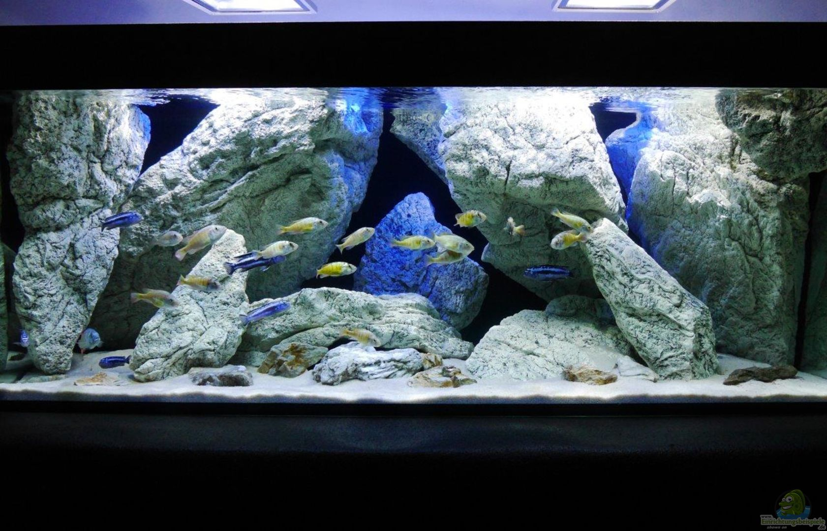 aquarium von petr novak 30228 unterwasser h hle. Black Bedroom Furniture Sets. Home Design Ideas