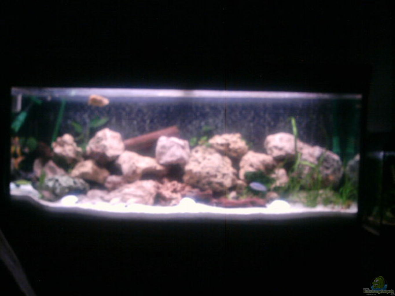 Aquarium von peter hahn becken 303 for Aquarium 120x40x50