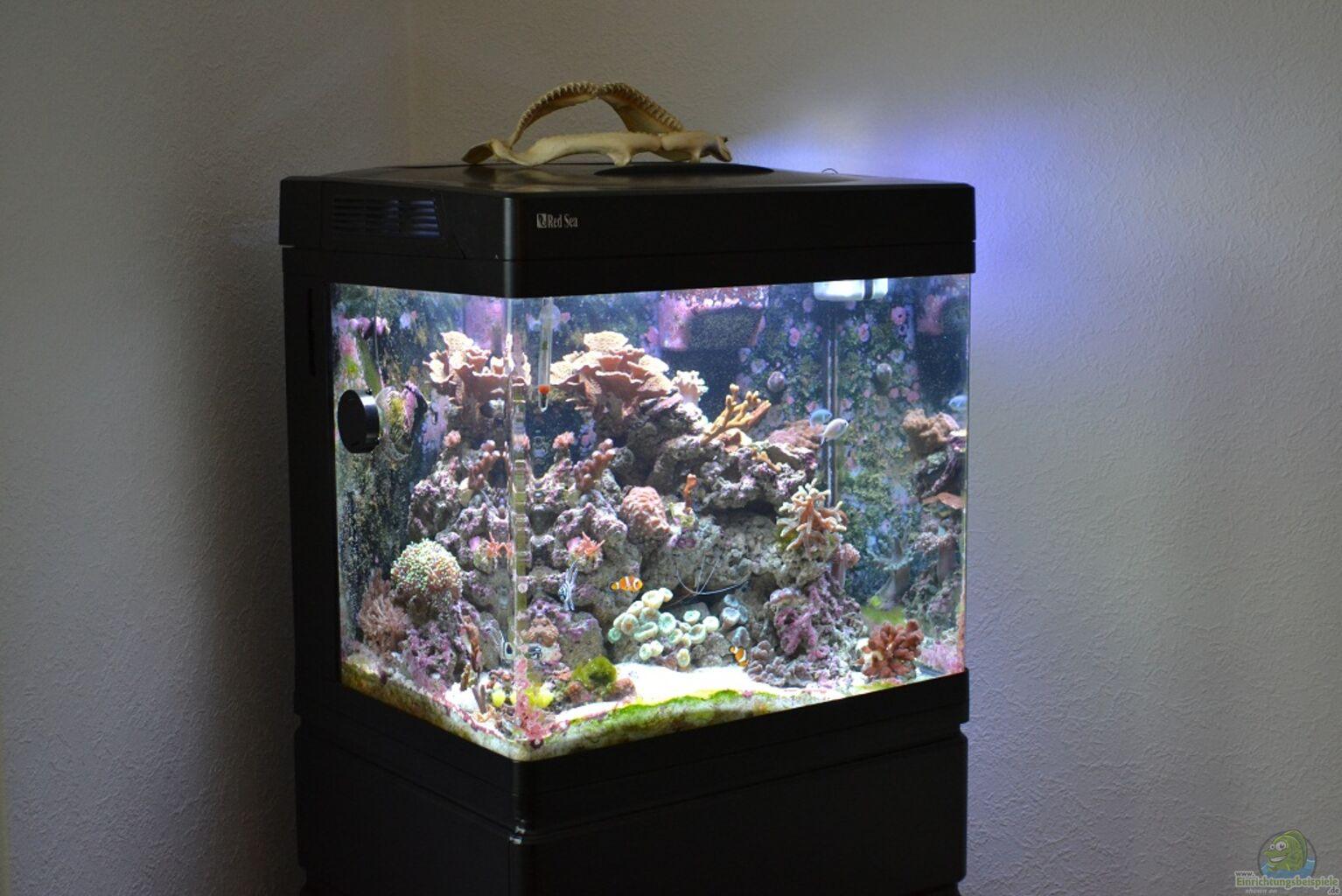 aquarium sea 130 28 images aquarium sea 130d 3d max. Black Bedroom Furniture Sets. Home Design Ideas
