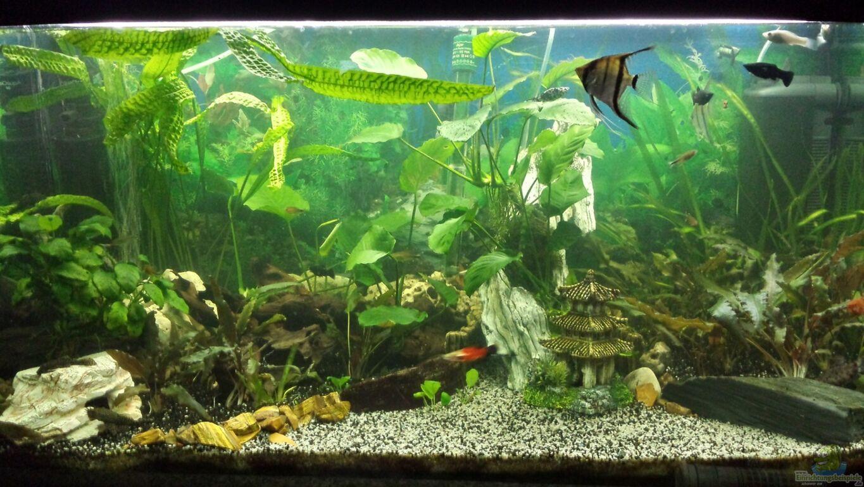 aquarium von mamo2000 gesellschaftsbecken. Black Bedroom Furniture Sets. Home Design Ideas