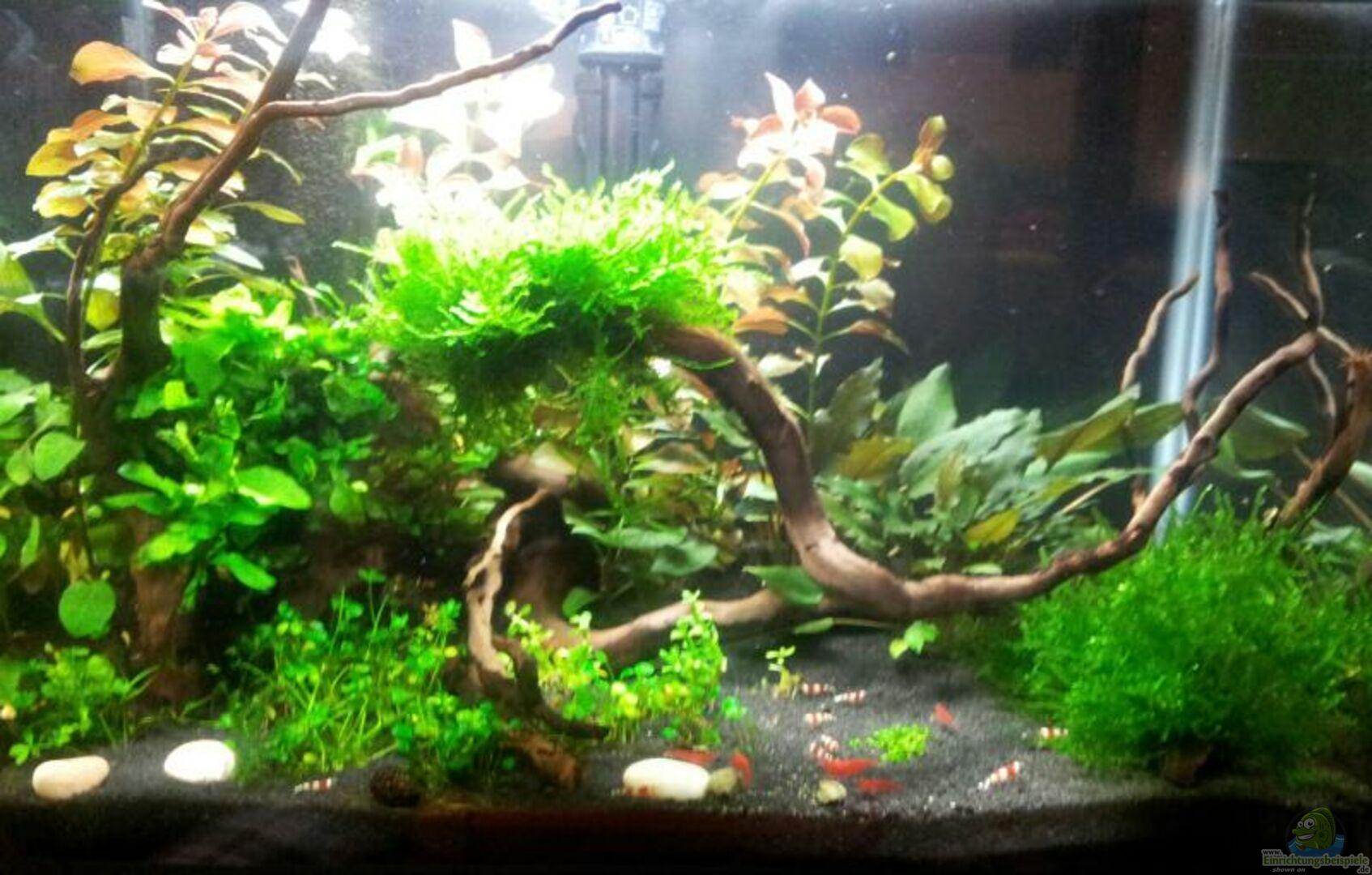 garnelen aquarium 30 liter aus m rchenhaft von feuervogel 82. Black Bedroom Furniture Sets. Home Design Ideas