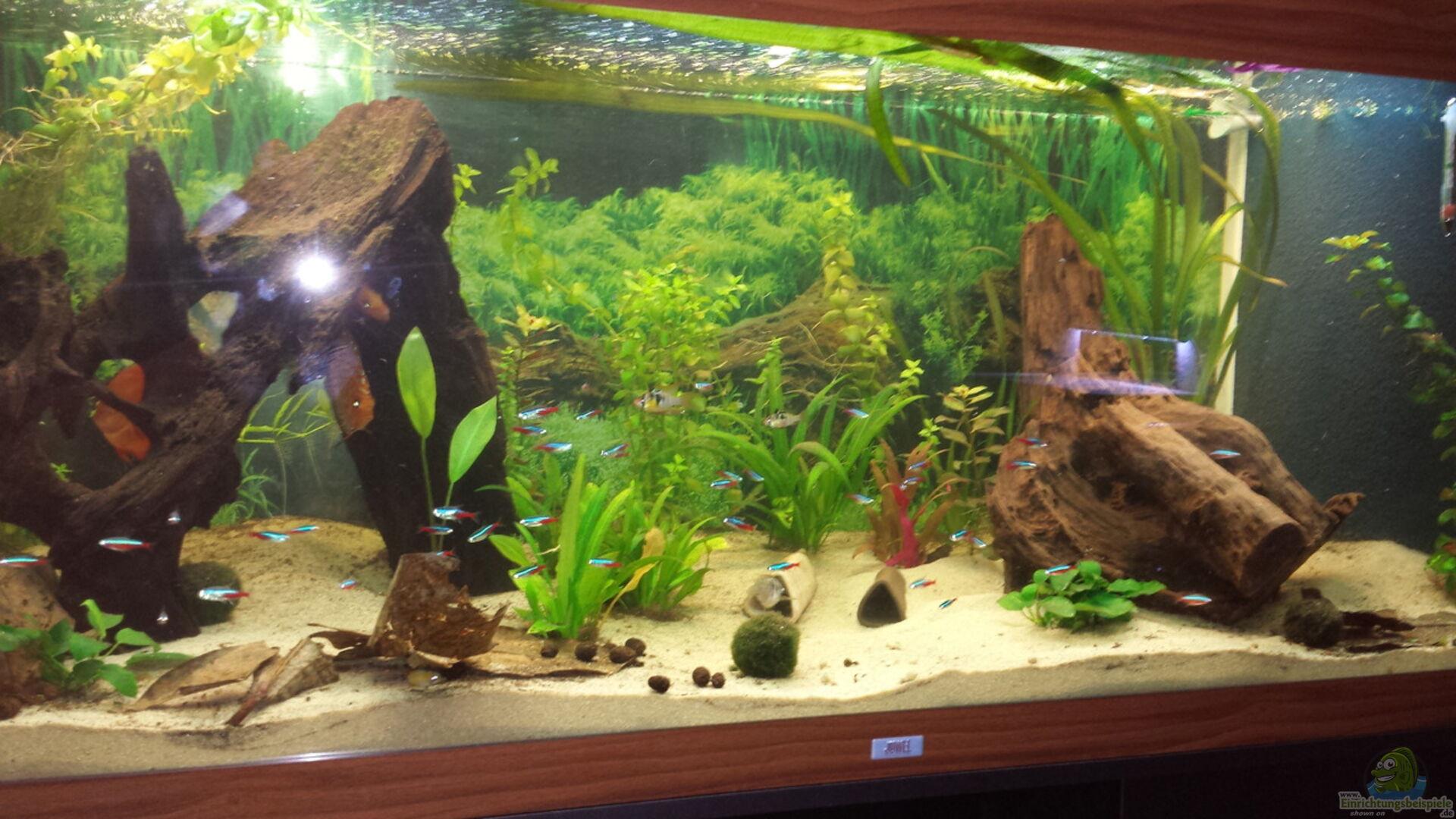 Aquarium von moe gesellschaftsbecken wohnzimmer - Aquarium wohnzimmer ...
