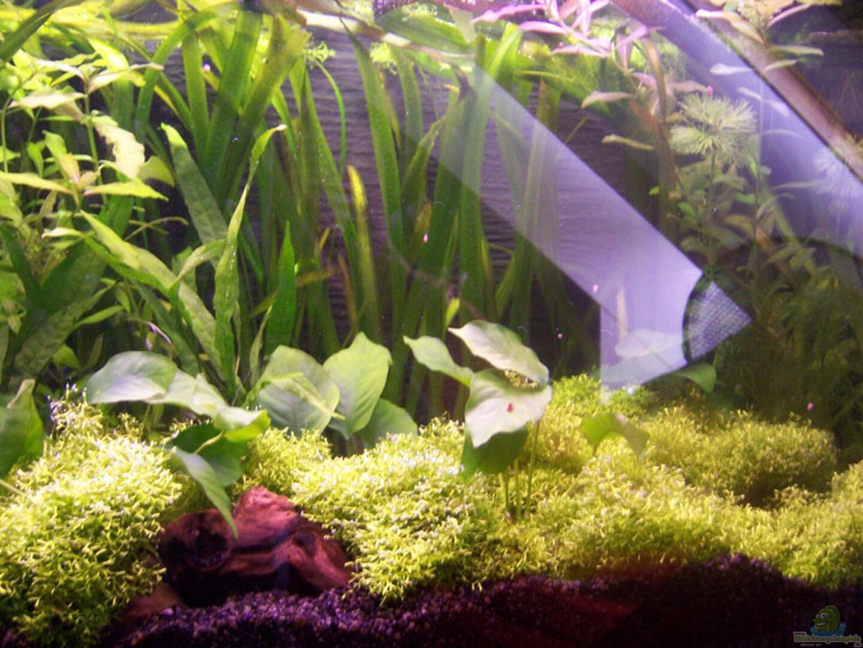 aquarium von sebastian seibold becken 3057. Black Bedroom Furniture Sets. Home Design Ideas
