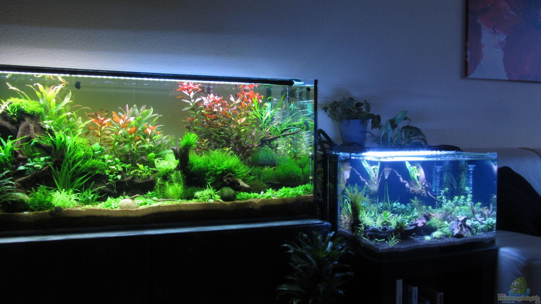 aquarium von thainrinn garnelenbecken. Black Bedroom Furniture Sets. Home Design Ideas