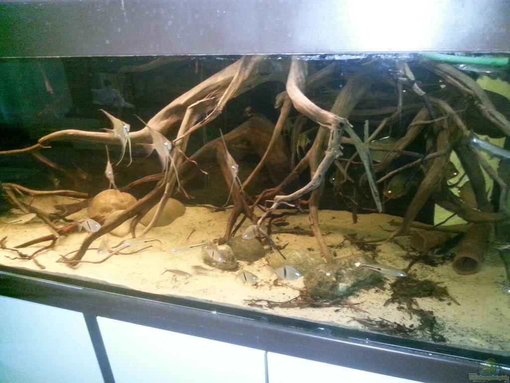 aquarium wurzeln aquarium wurzeln aquarium von der fischer. Black Bedroom Furniture Sets. Home Design Ideas