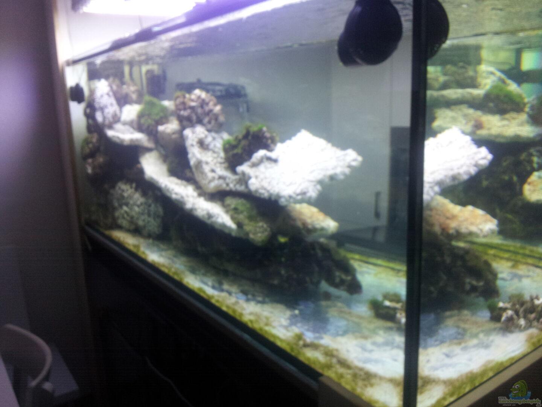 aquarium von slobe 30602 raumteiler. Black Bedroom Furniture Sets. Home Design Ideas