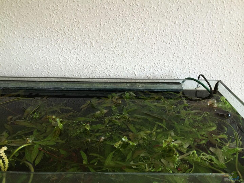 aquarium von mesmerize becken 30604. Black Bedroom Furniture Sets. Home Design Ideas