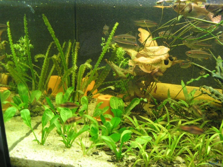 pflanzen im aquarium becken 3061 aus becken 3061 von frank muth. Black Bedroom Furniture Sets. Home Design Ideas