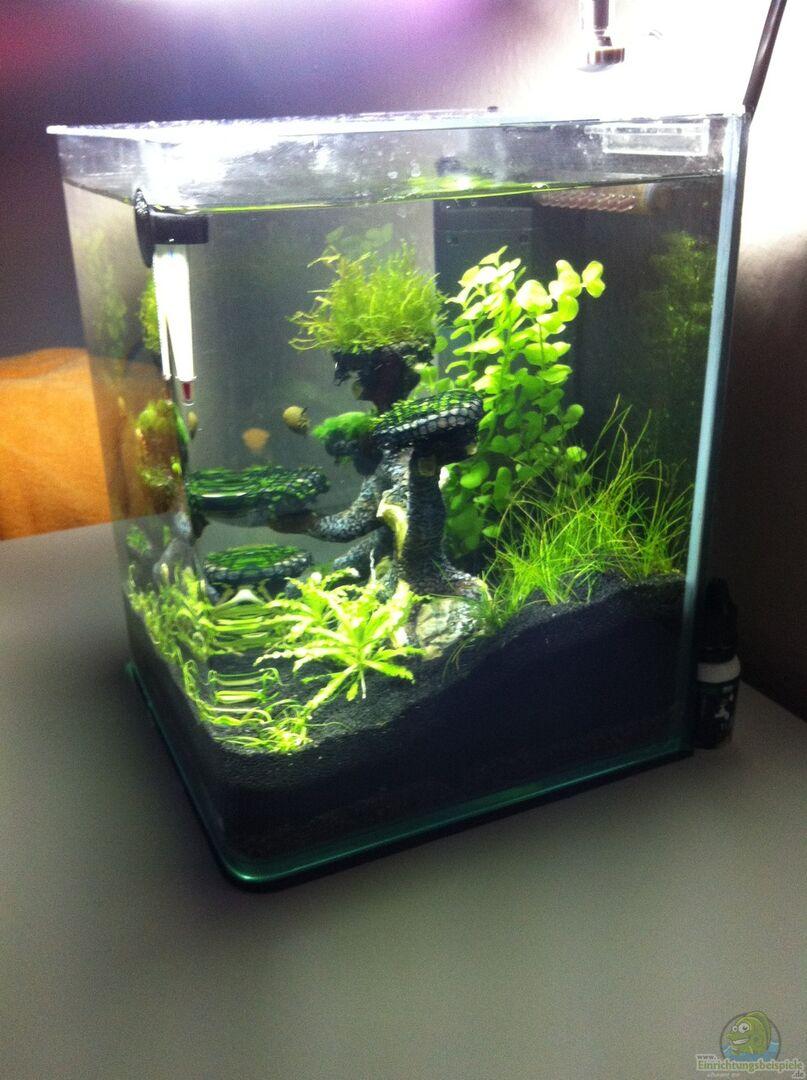 aquarium von rozan 30612 mini dennerle scape. Black Bedroom Furniture Sets. Home Design Ideas