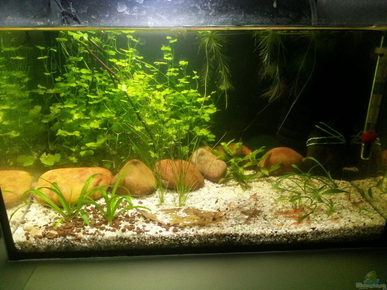 aquarium von betta ufuk 30614 kleines kleeblatt. Black Bedroom Furniture Sets. Home Design Ideas