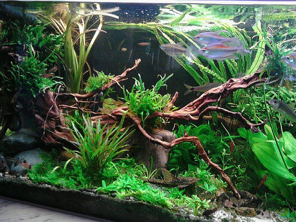 aquarium von gr nhexe becken 30620 innerer frieden. Black Bedroom Furniture Sets. Home Design Ideas
