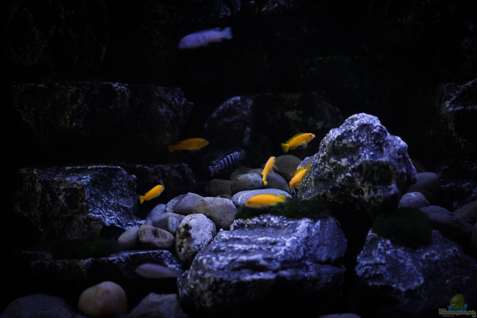 Aquarium Von Pa Trick Rocky Cliffs