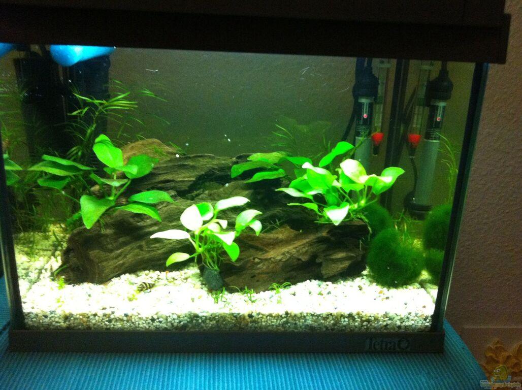 Aquarium von rozan mein erstes nano becken for Mein aquarium