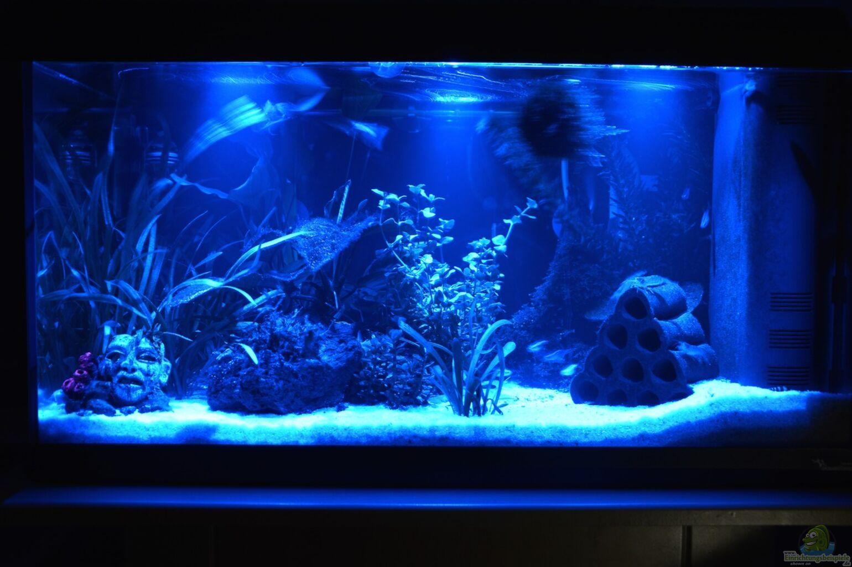 aquarium von will mein allererstes aquarium. Black Bedroom Furniture Sets. Home Design Ideas