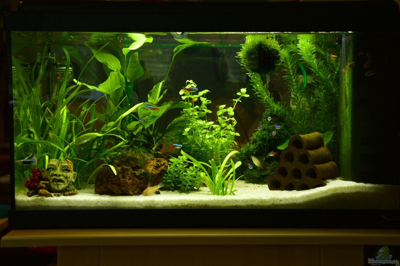 aquarium von will 30687 mein allererstes aquarium. Black Bedroom Furniture Sets. Home Design Ideas