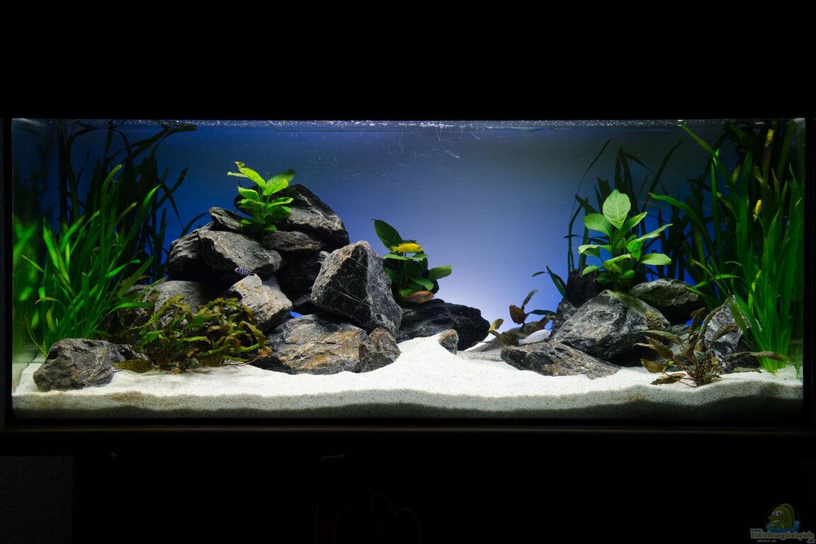 aquarium von st3aman green malawi scape. Black Bedroom Furniture Sets. Home Design Ideas