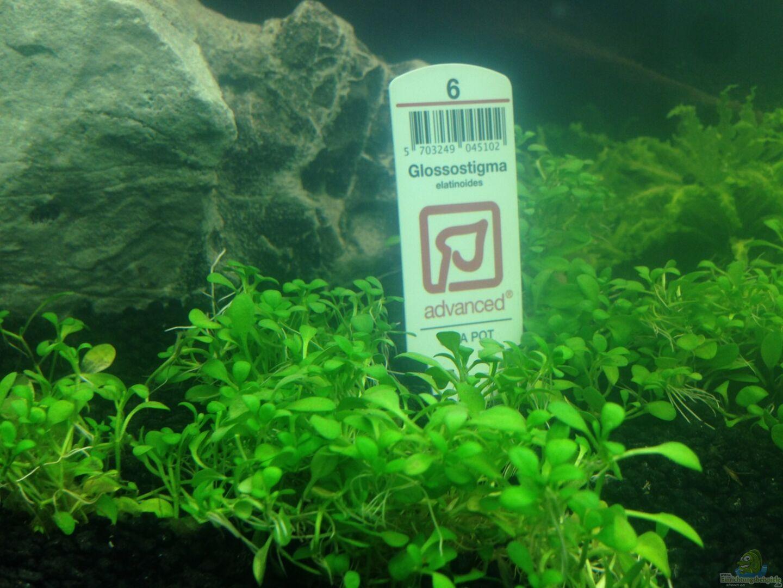 pflanzen im aquarium eheim proxima 325 aus eheim proxima. Black Bedroom Furniture Sets. Home Design Ideas
