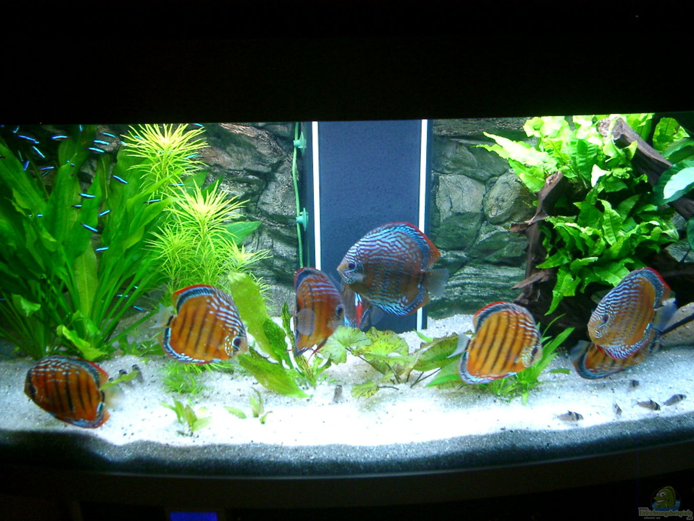 Example no 3074 from the category mixed america tanks for Diskus aquarium