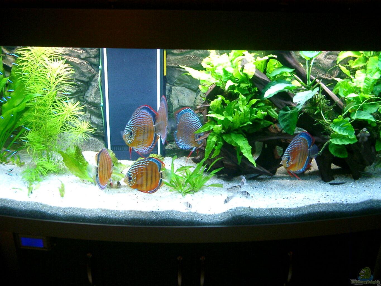 diskus aquarium aus becken 3074 alex diskus aquarium von altho81. Black Bedroom Furniture Sets. Home Design Ideas