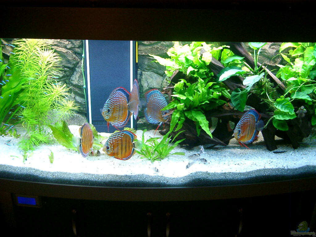 altho81 becken 3074 alex diskus aquarium. Black Bedroom Furniture Sets. Home Design Ideas