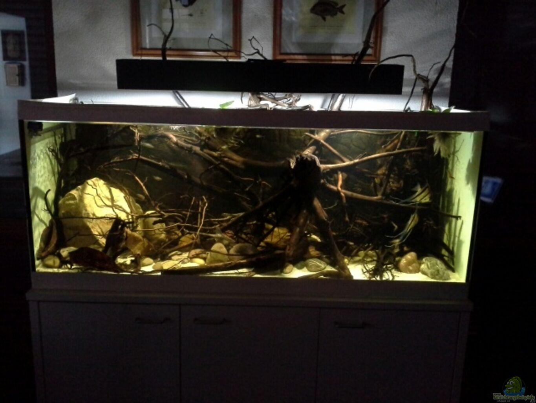 aquarium hauptansicht von 450 l wurzelbiotop aus 450 l wurzelbiotop von markaroni. Black Bedroom Furniture Sets. Home Design Ideas