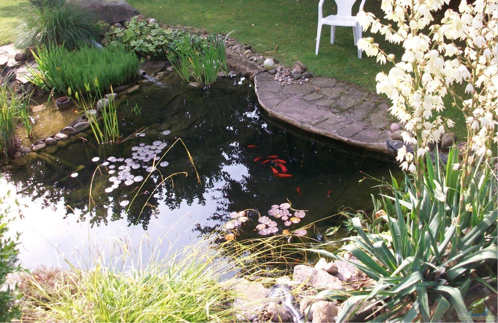 Teich jetzt im sommer von oben inzwischen m ssen einige for Zierfische im teich