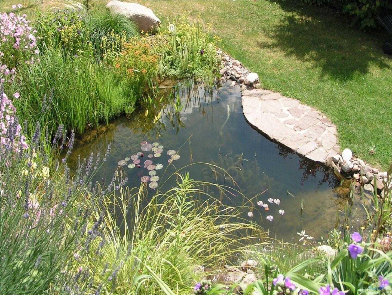 Teich vor ein paar jahren im fr hjahr aus gartenteich von lily for Zierfische im teich