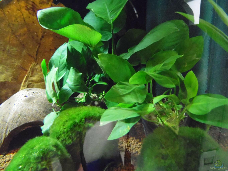 aquarium von shiru k10 becken 30791. Black Bedroom Furniture Sets. Home Design Ideas