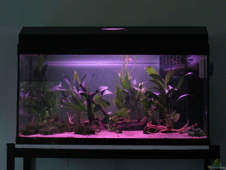aquarium von thomas ihle 30797 naturbiotop thailand. Black Bedroom Furniture Sets. Home Design Ideas