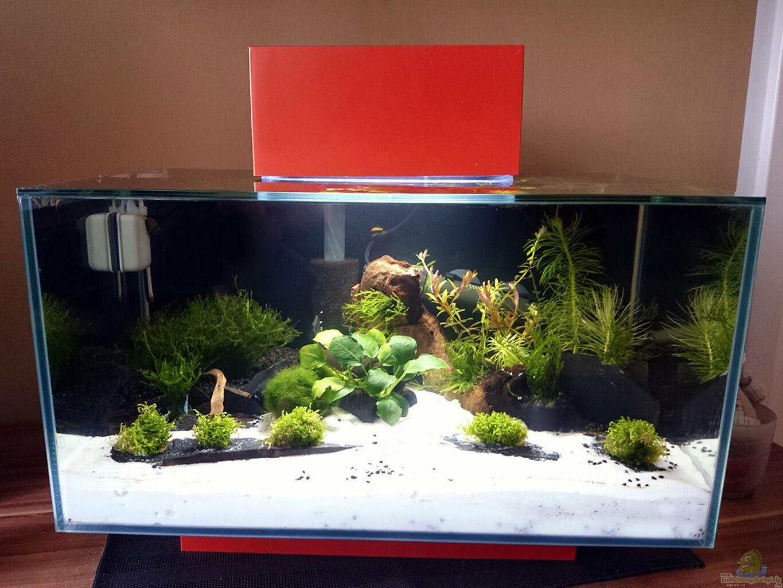 aquarium von fabian g fluval edge 2. Black Bedroom Furniture Sets. Home Design Ideas