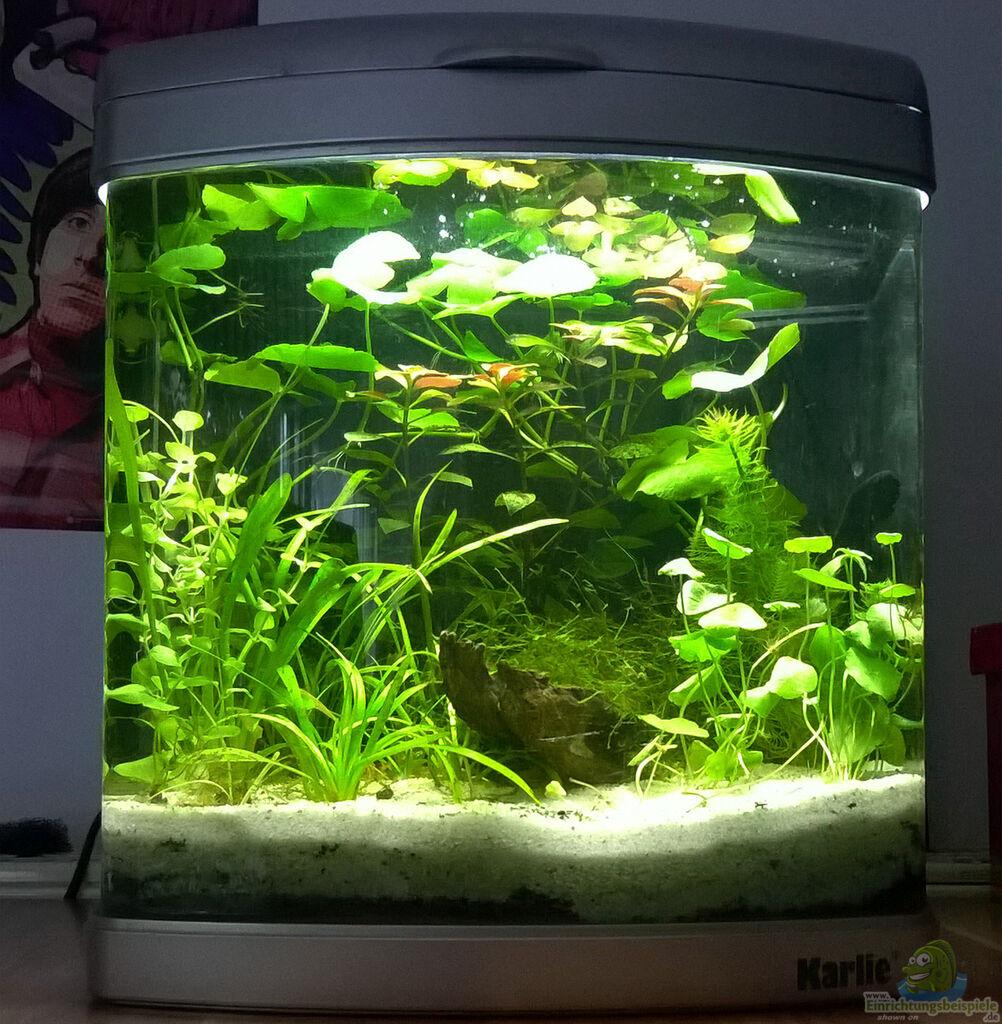 aquarium von mario74 garnelen becken cr. Black Bedroom Furniture Sets. Home Design Ideas