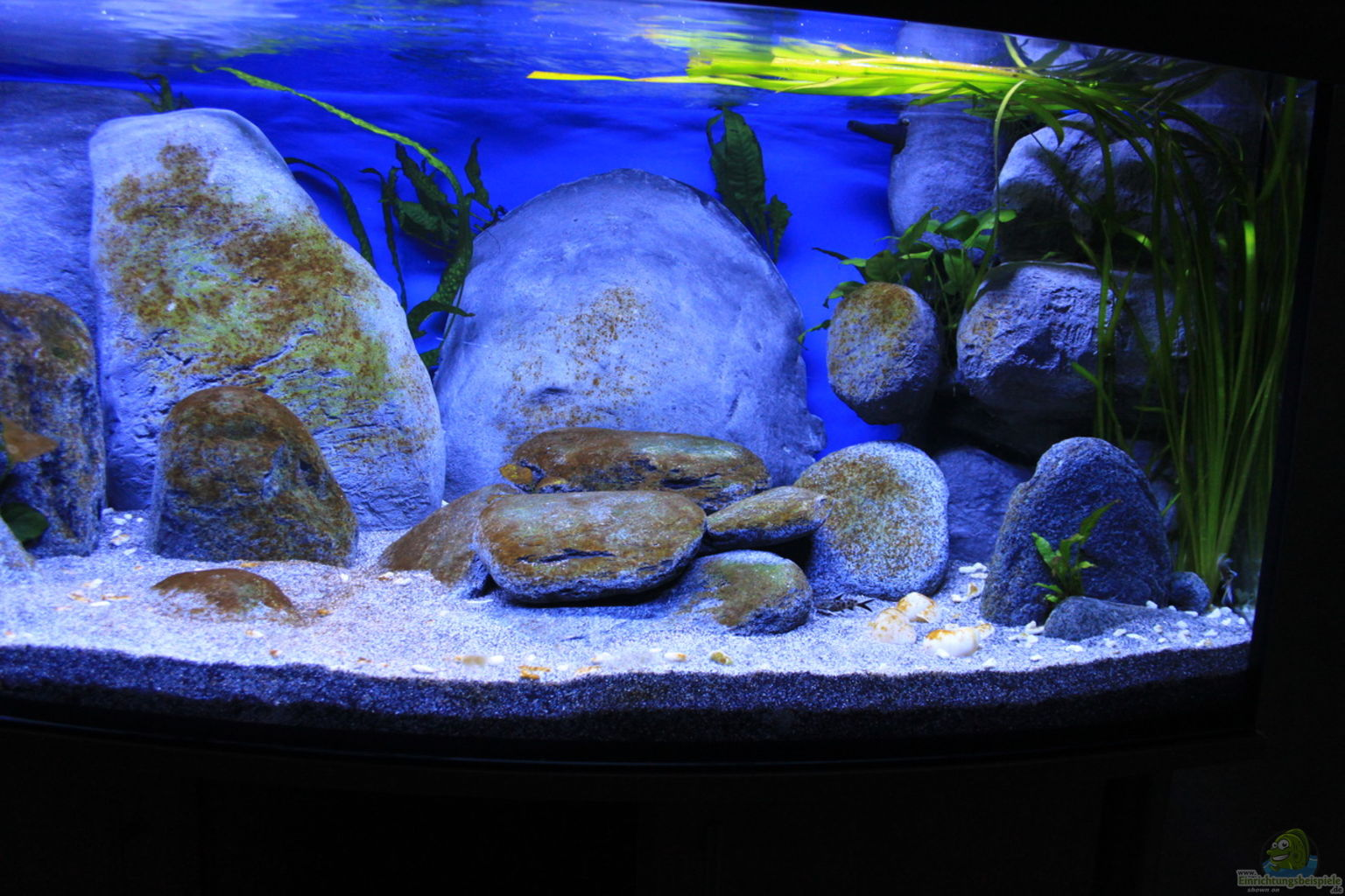 aquarium mondlicht algen