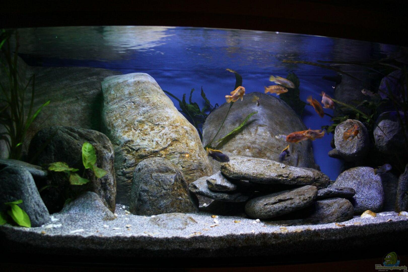 aquarium von borg 30885 malawibecken. Black Bedroom Furniture Sets. Home Design Ideas