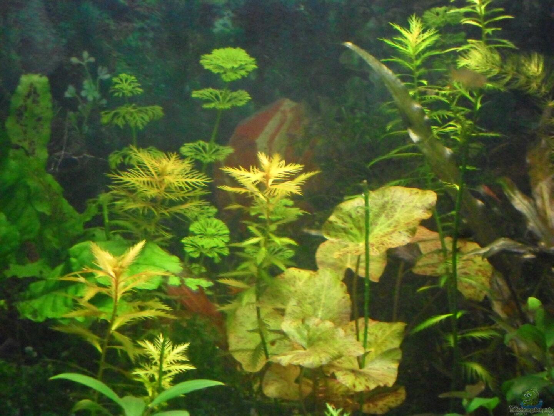 aquarium von kleines becken 30892 mini becken. Black Bedroom Furniture Sets. Home Design Ideas