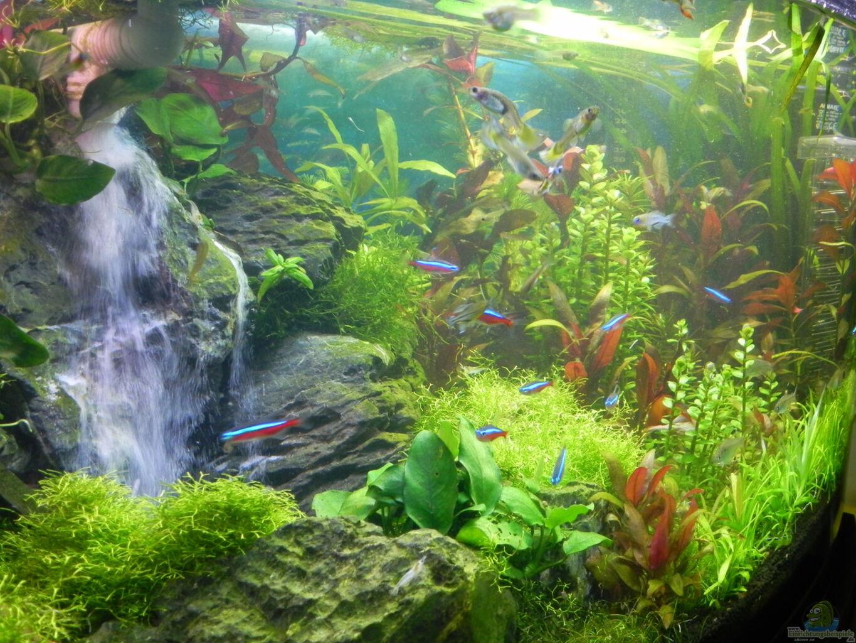 aquarium von stefan nibel becken 30905. Black Bedroom Furniture Sets. Home Design Ideas