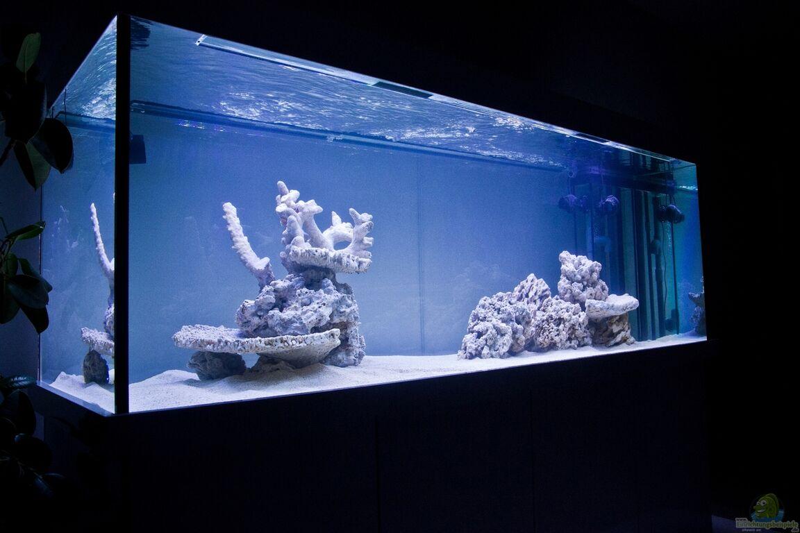 einrichtungsbeispiele f r meerwasser aquarien. Black Bedroom Furniture Sets. Home Design Ideas