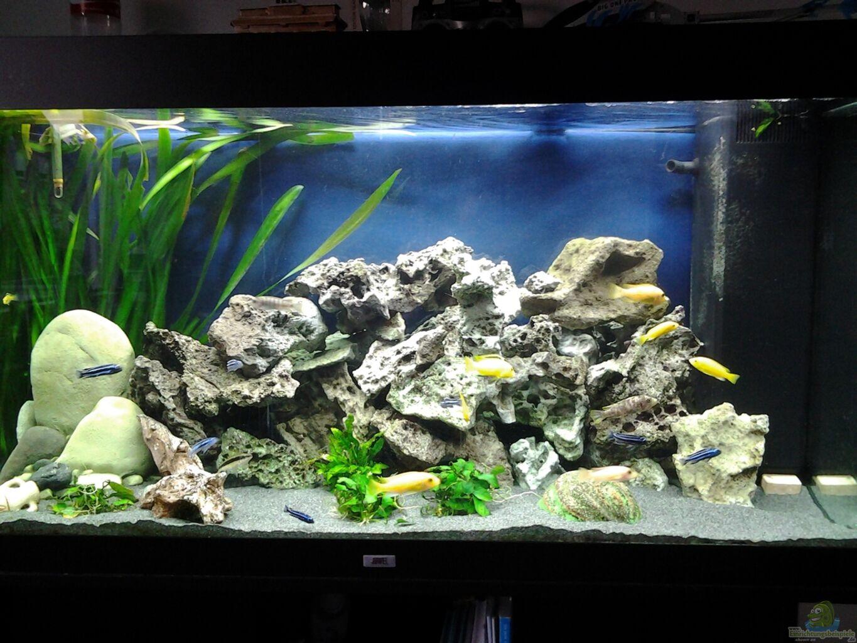 Aquarium von sascha56 malawi aqaurium 350 l for Aquarium 350 litres