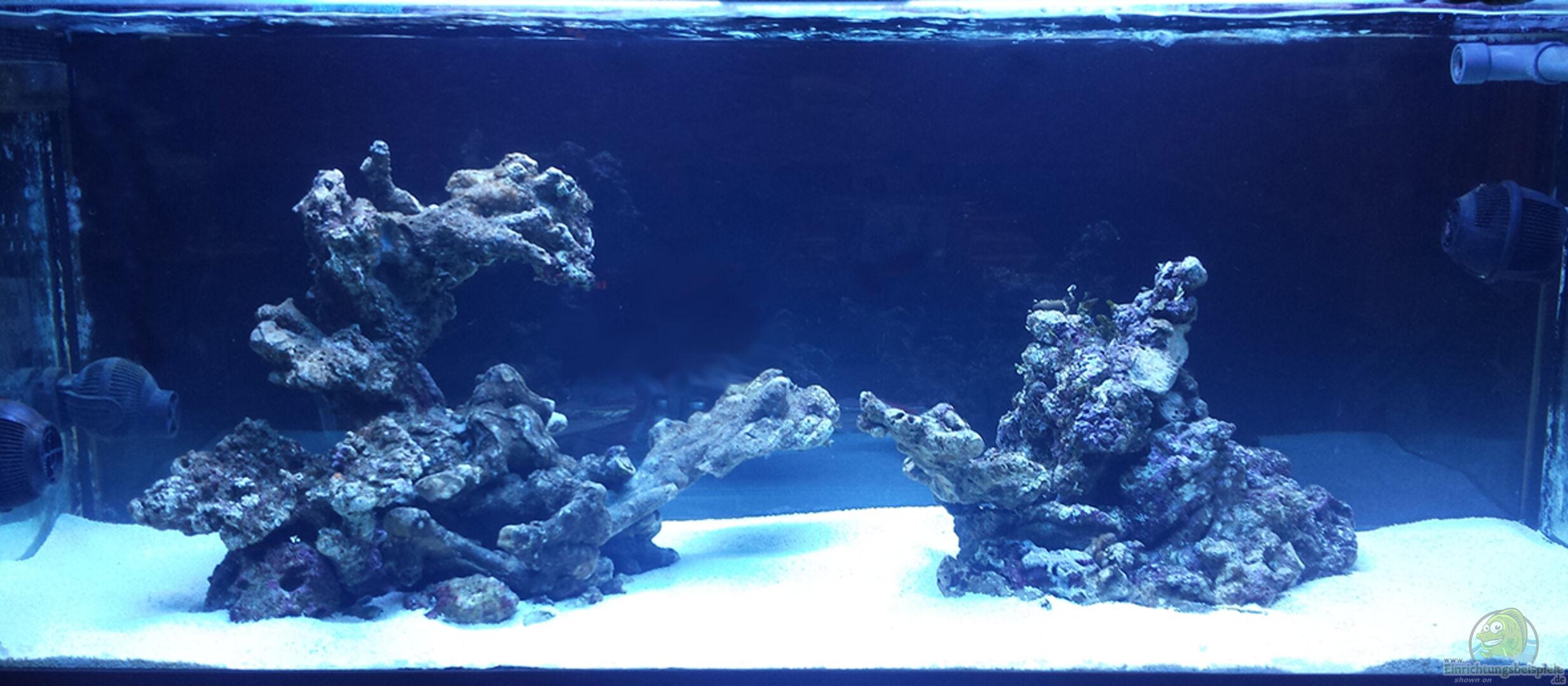 aquarium von flevus 30981 flev s 1 1k mewa tank. Black Bedroom Furniture Sets. Home Design Ideas