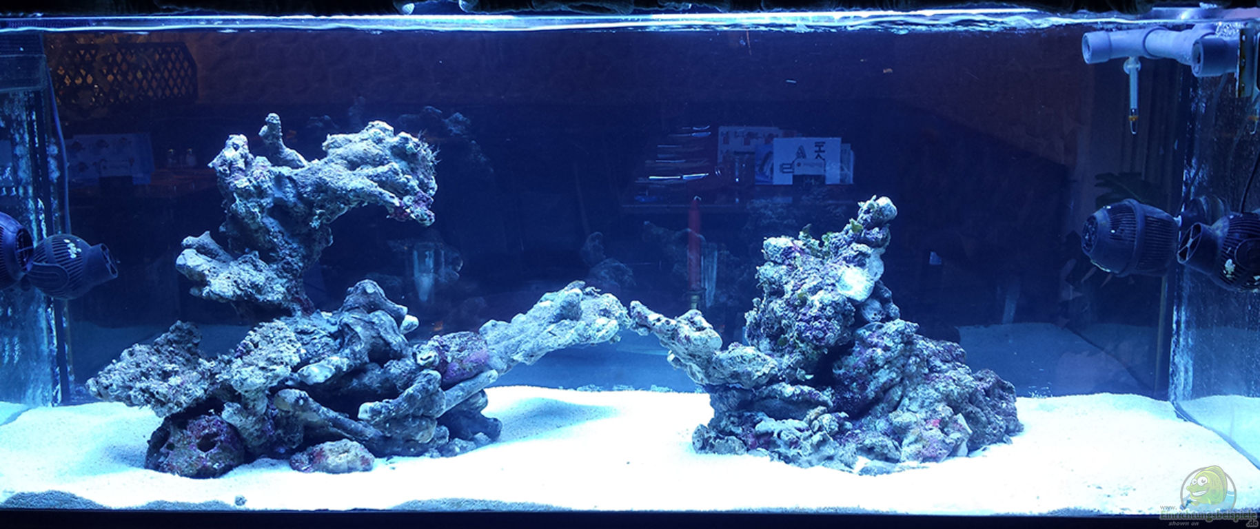 aquarium von flevus flev s 1 1k mewa tank. Black Bedroom Furniture Sets. Home Design Ideas