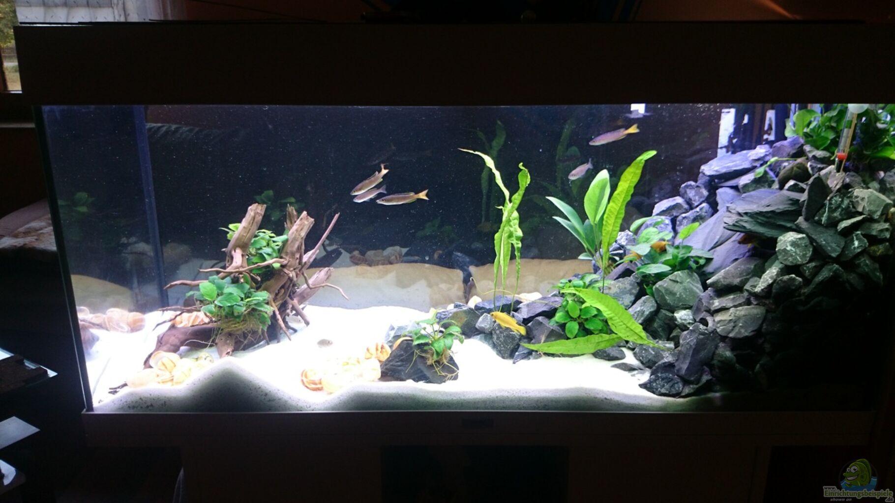 Aquarium von mobbl mein erster versuch for Mein aquarium