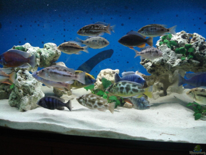 Aquarium von Dennis Kaiser: Becken 3104