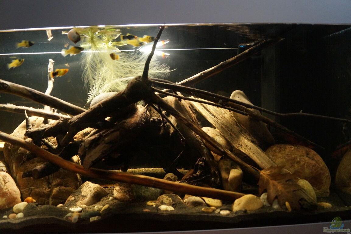 Aquarium von Rootsman  Platy Biotop