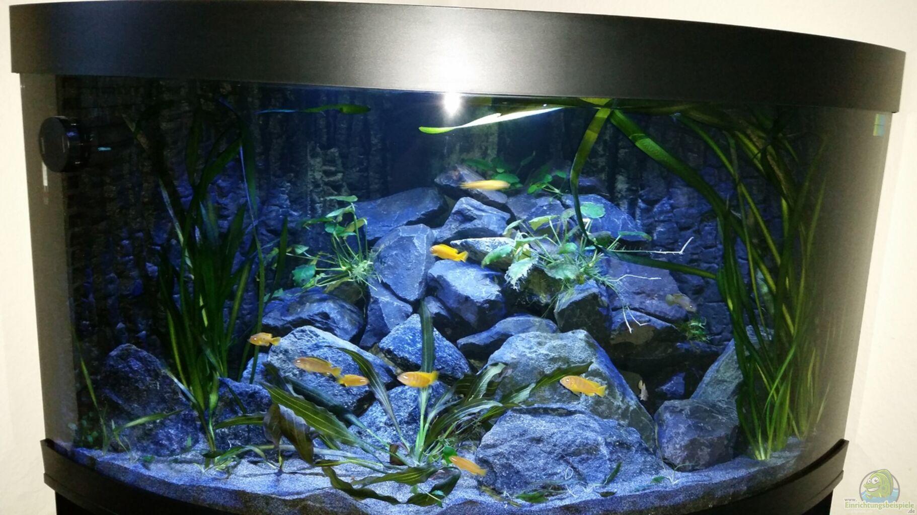 bersicht ber die aquariumbilder aus den 8598 beispielen seite 106. Black Bedroom Furniture Sets. Home Design Ideas
