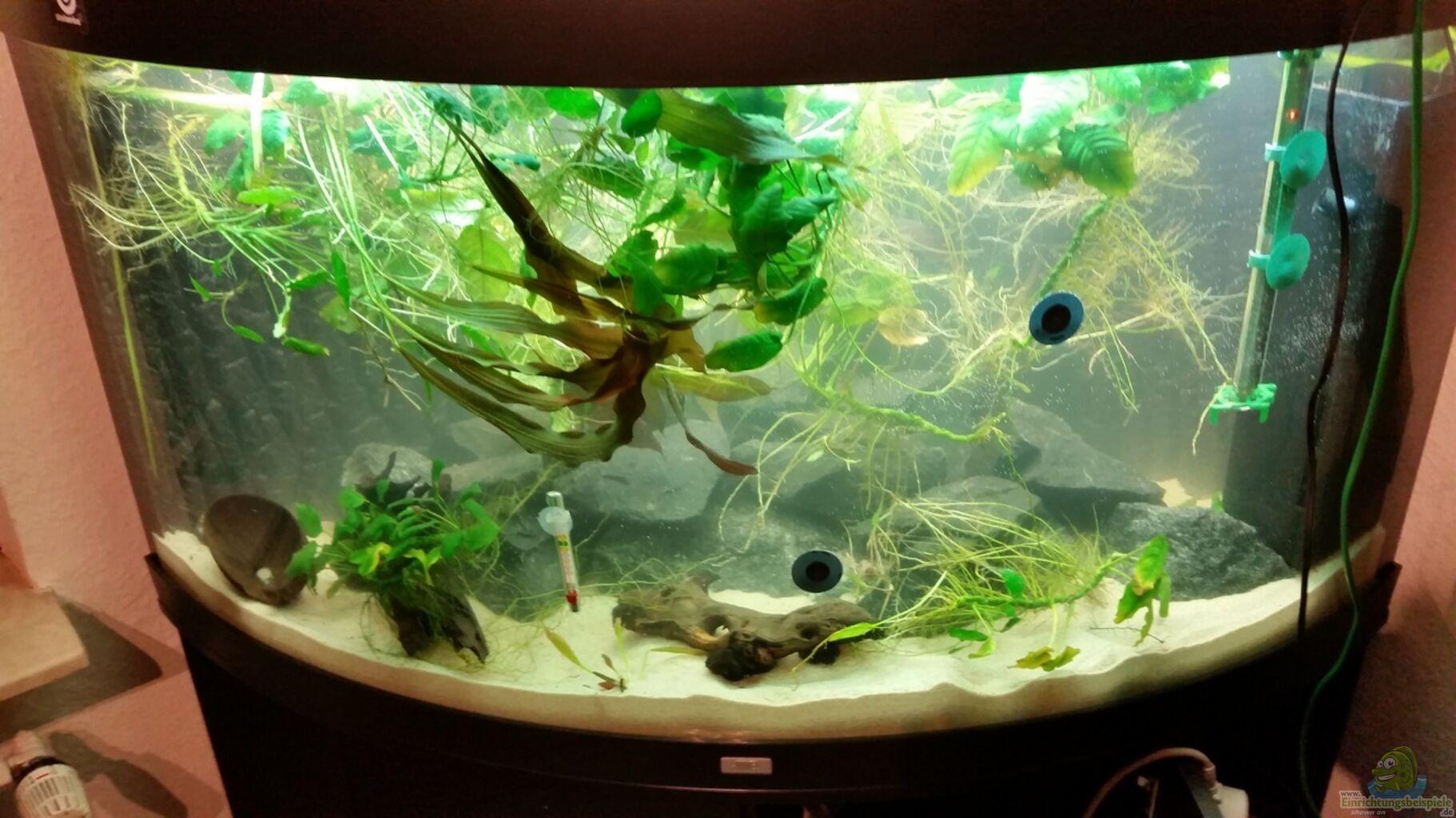 aquarium von gunnar2060 malawi juwel trigon 350. Black Bedroom Furniture Sets. Home Design Ideas