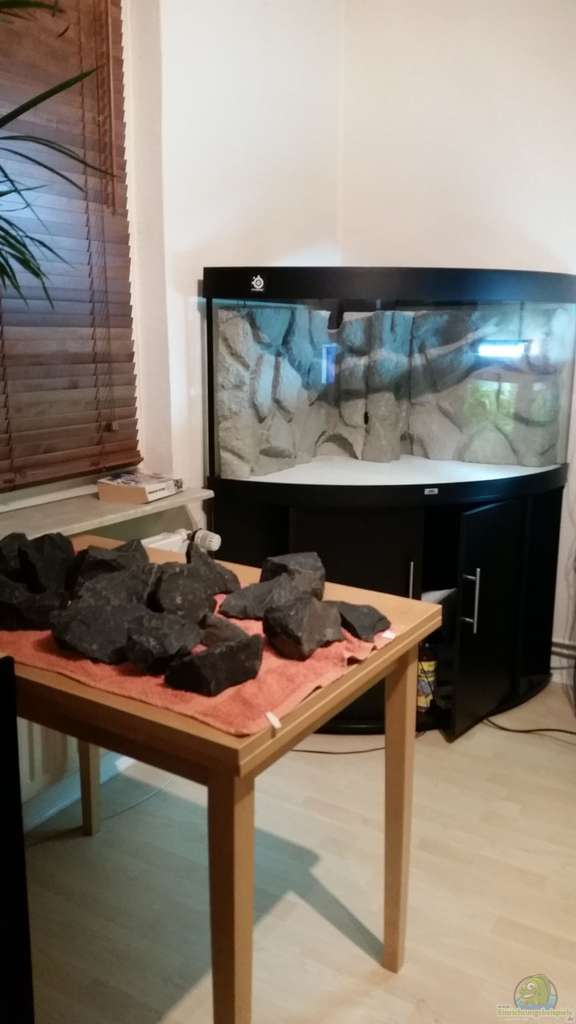 aquarium malawi juwel trigon 350 aus malawi juwel trigon 350 von gunnar2060. Black Bedroom Furniture Sets. Home Design Ideas