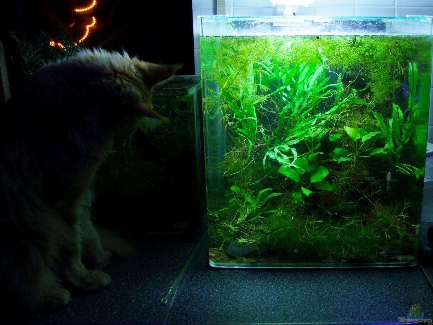 bersicht ber die aquariumbilder aus den beispielen. Black Bedroom Furniture Sets. Home Design Ideas