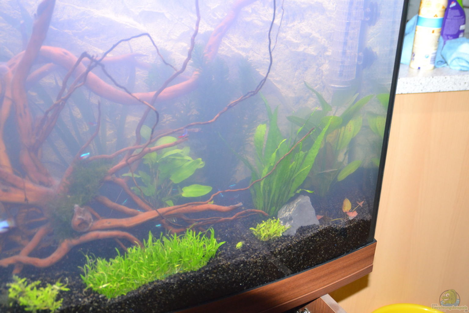 aquarium von michaela juwel vision 260. Black Bedroom Furniture Sets. Home Design Ideas