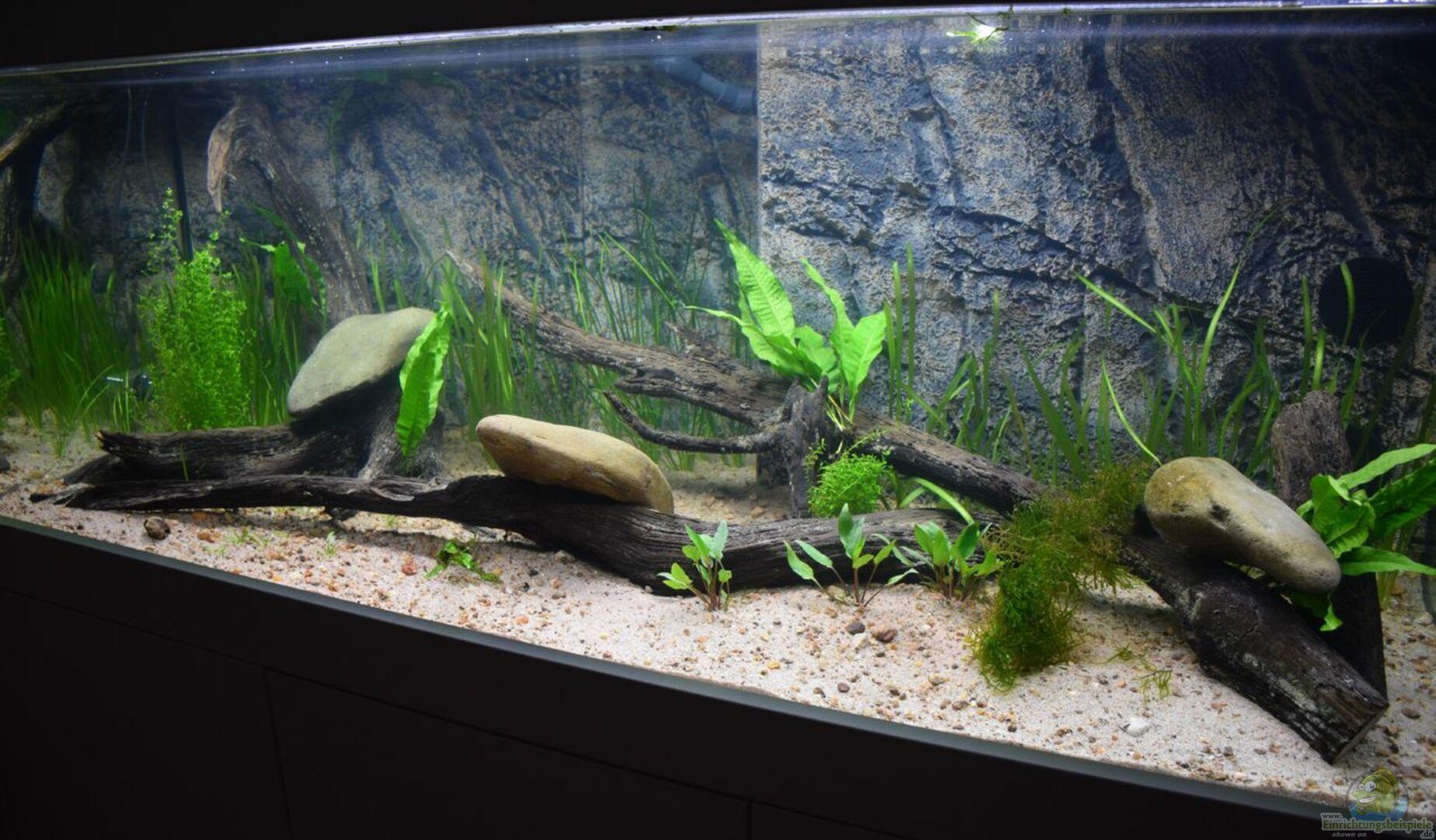 aquarium von christian andreas 31124 qiupu river. Black Bedroom Furniture Sets. Home Design Ideas