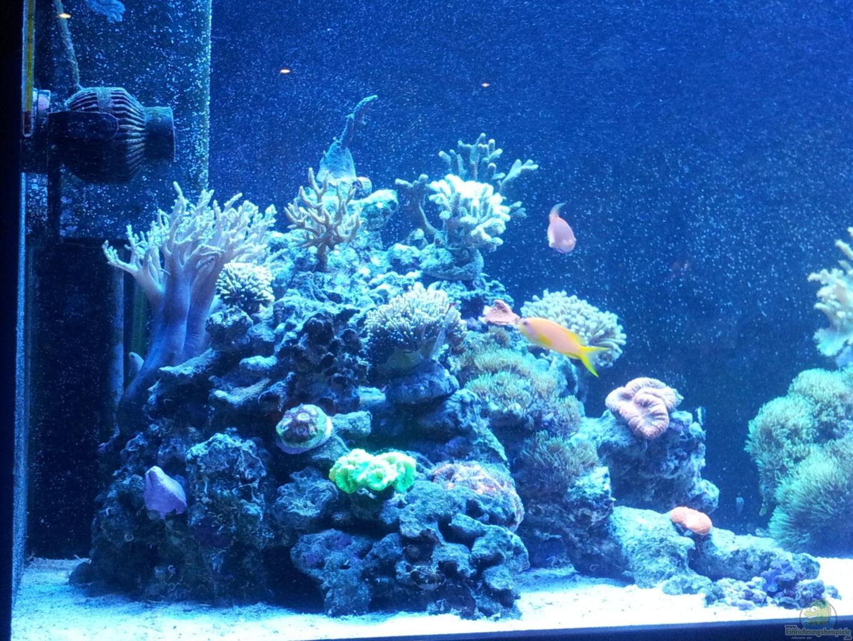 Aquarium von ollil81 riff im wohnzimmer - Aquarium wohnzimmer ...